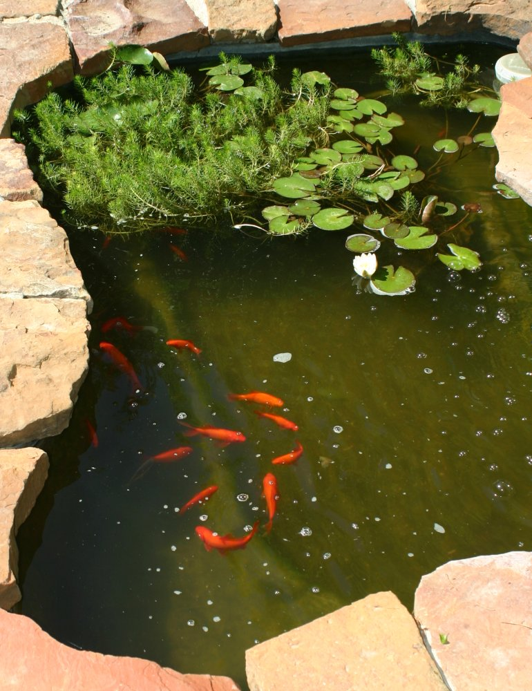 Pond And Pits